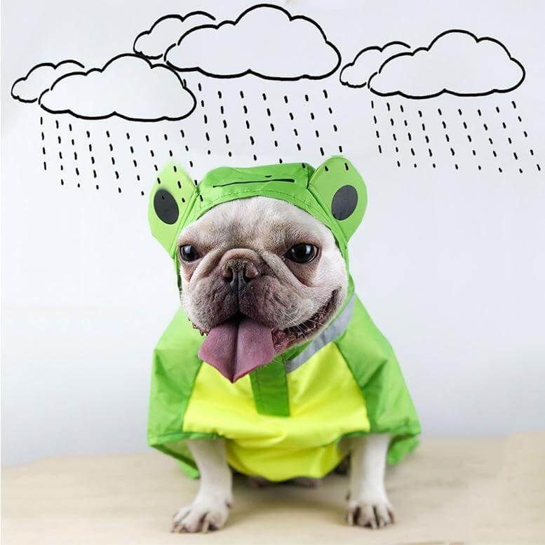 Raincoat for Frenchies