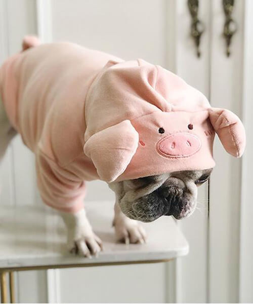 Adorable Piggy Hoodie For Frenchie