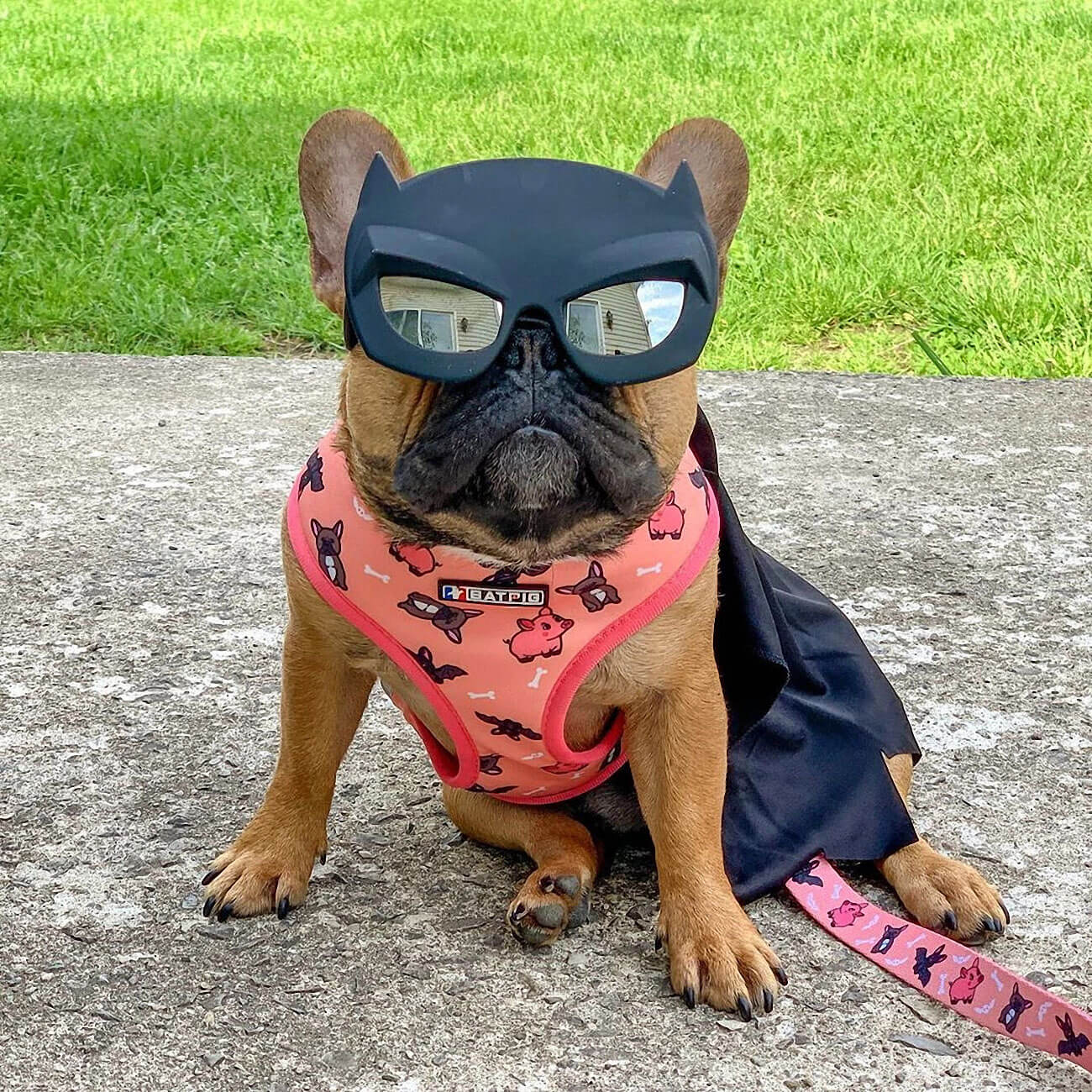 BATPIG Pet Supply Harness