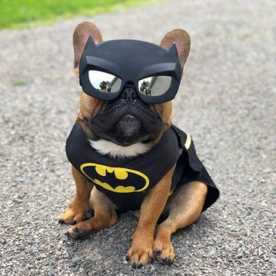 Batpig wearing bat mask