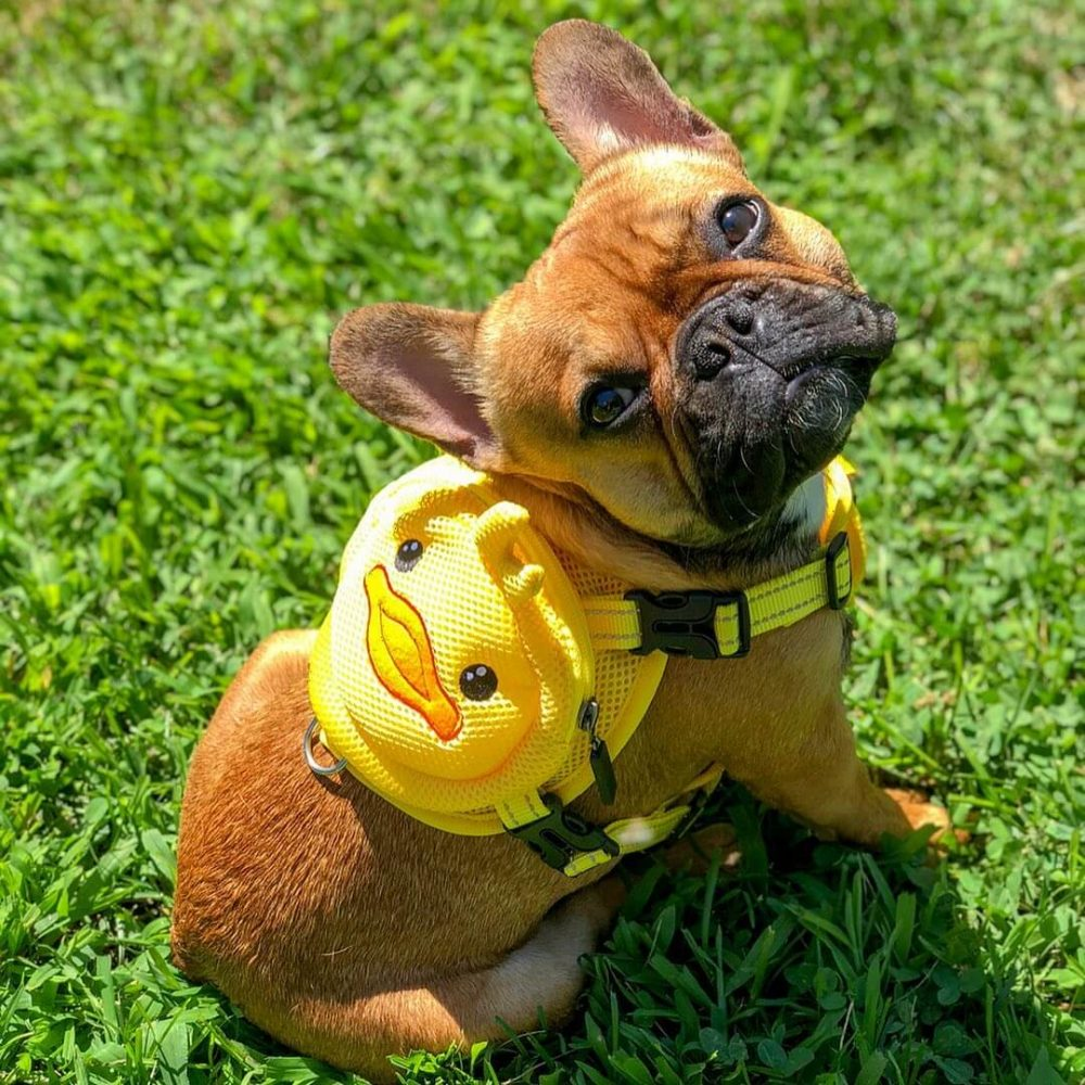 Ducky Dog Backpack Harness