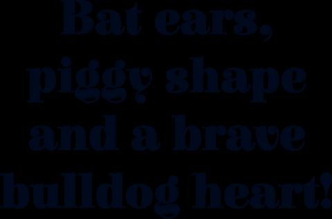 Batpig slogan