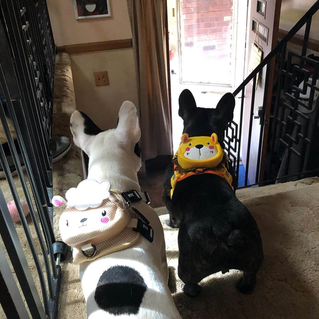BATPIG Backpack Harness Lamb - Customer Photo 14