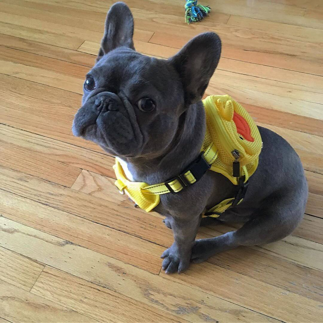 BATPIG Backpack Harness Ducky Customer Photo 2