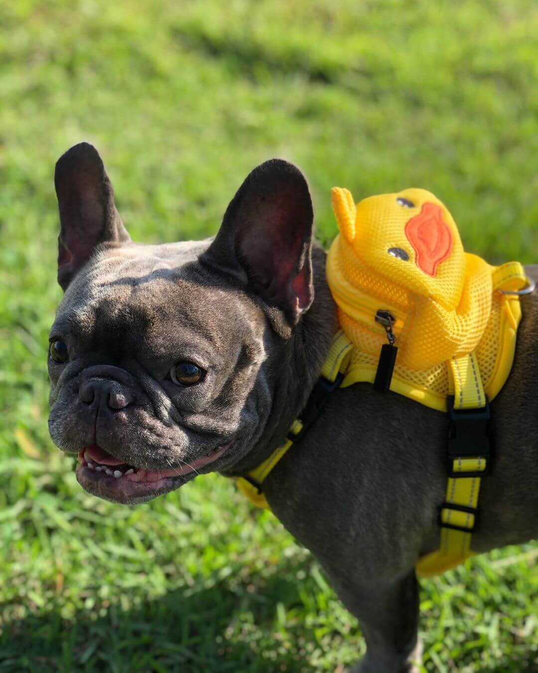 BATPIG Backpack Harness Ducky Customer Photo 3