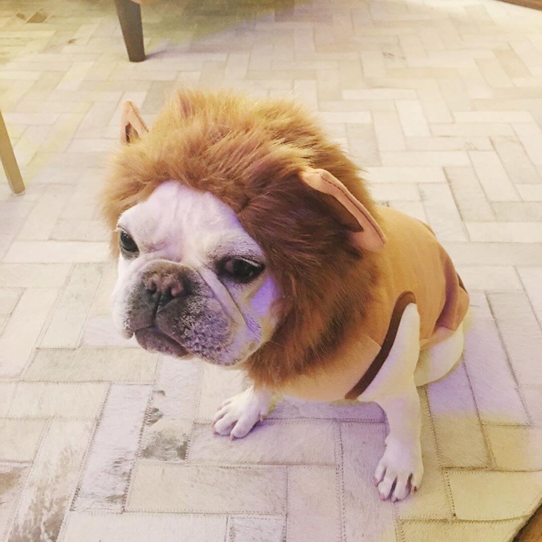 BATPIG Pet Supply Lion Hoodie Customer Photo 1