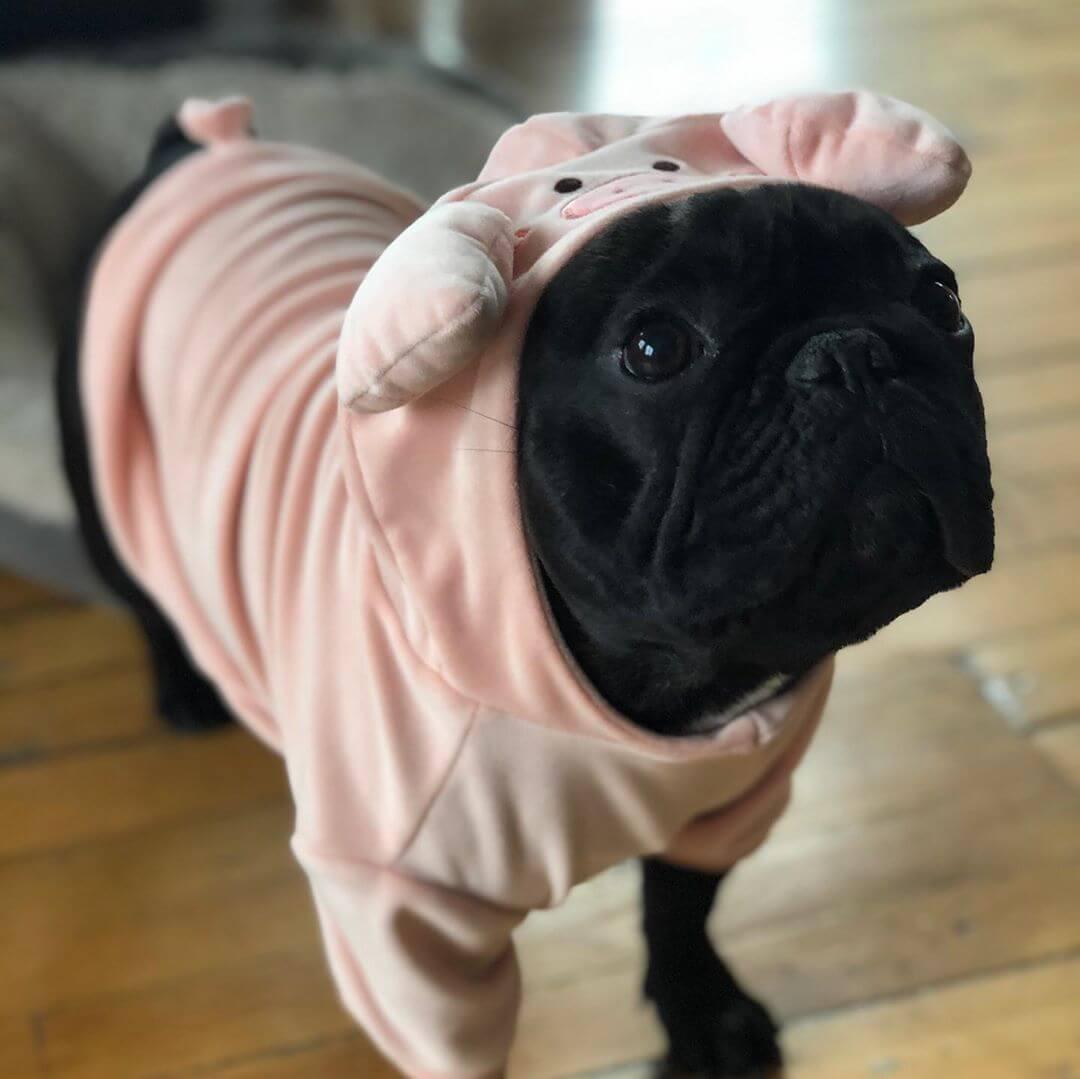 BATPIG Pet Supply Piggy Hoodie Customer Photo 1