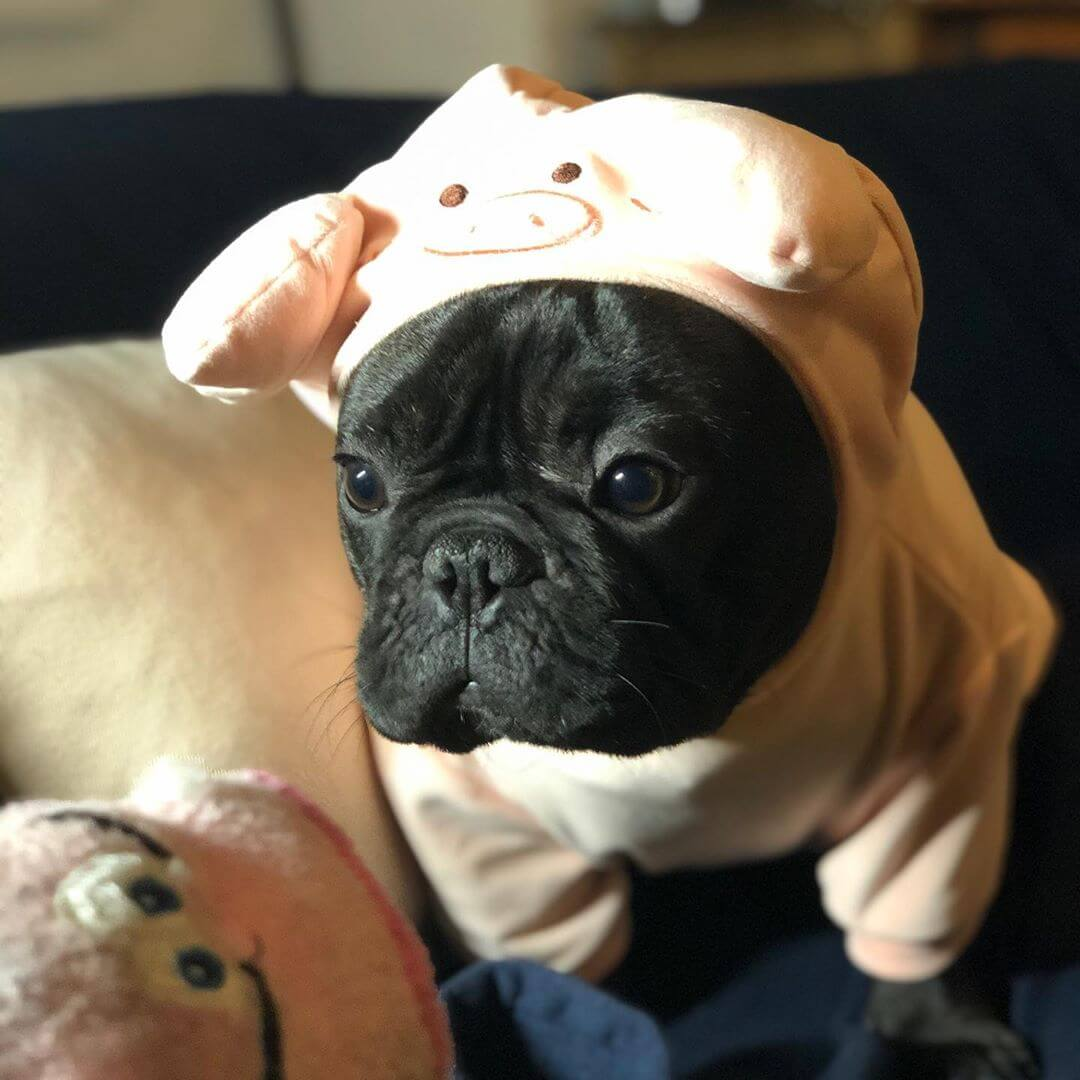 BATPIG Pet Supply Piggy Hoodie Customer Photo 2