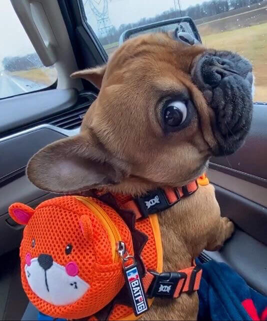 BATPIG Lion Backpack Harness Orange