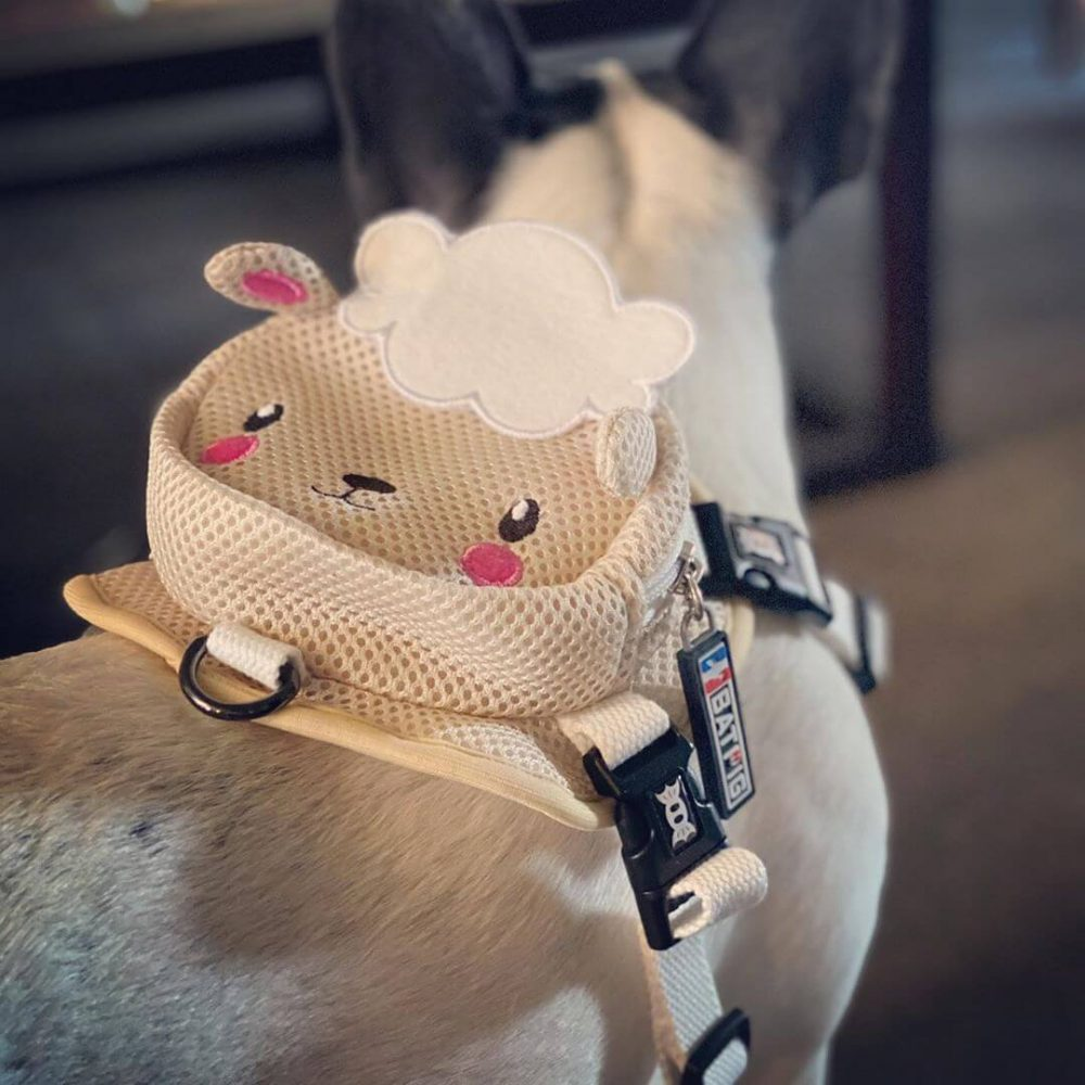 BATPIG Backpack Harness Lamb - Customer Photo 5