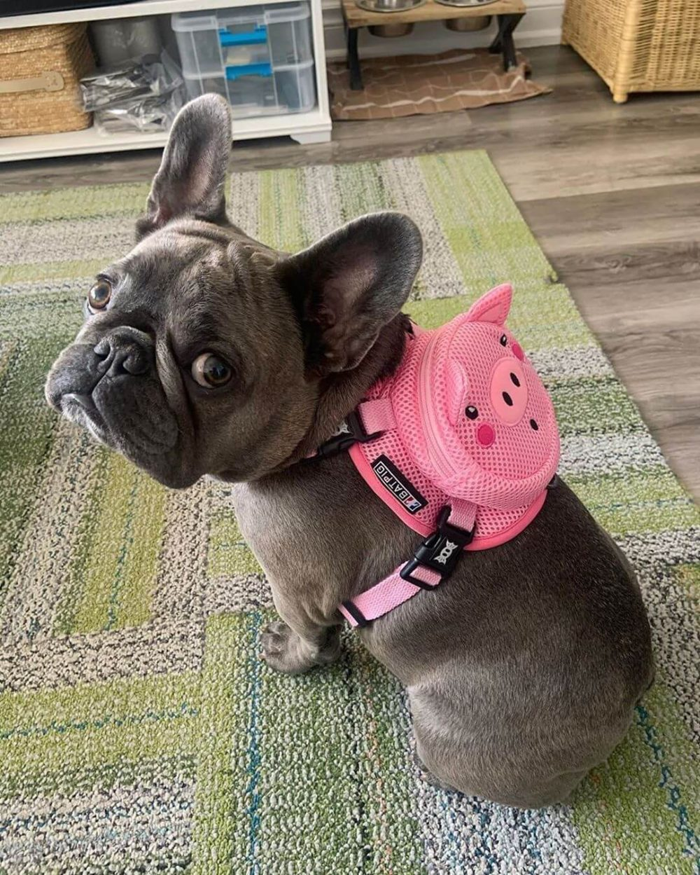 BATPIG Backpack Oink Oink Piggy