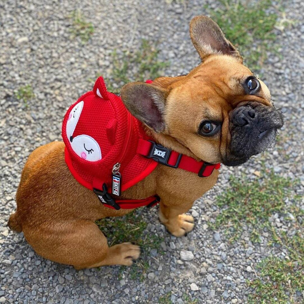 Reddy Foxy Backpack Harness by BATPIG Pet Supply