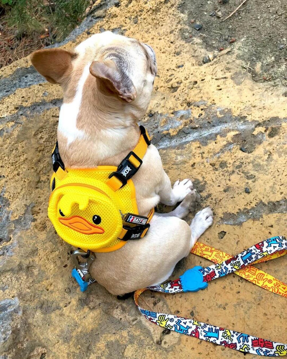 BATPIG Backpack Harness Ducky Customer Photo 4