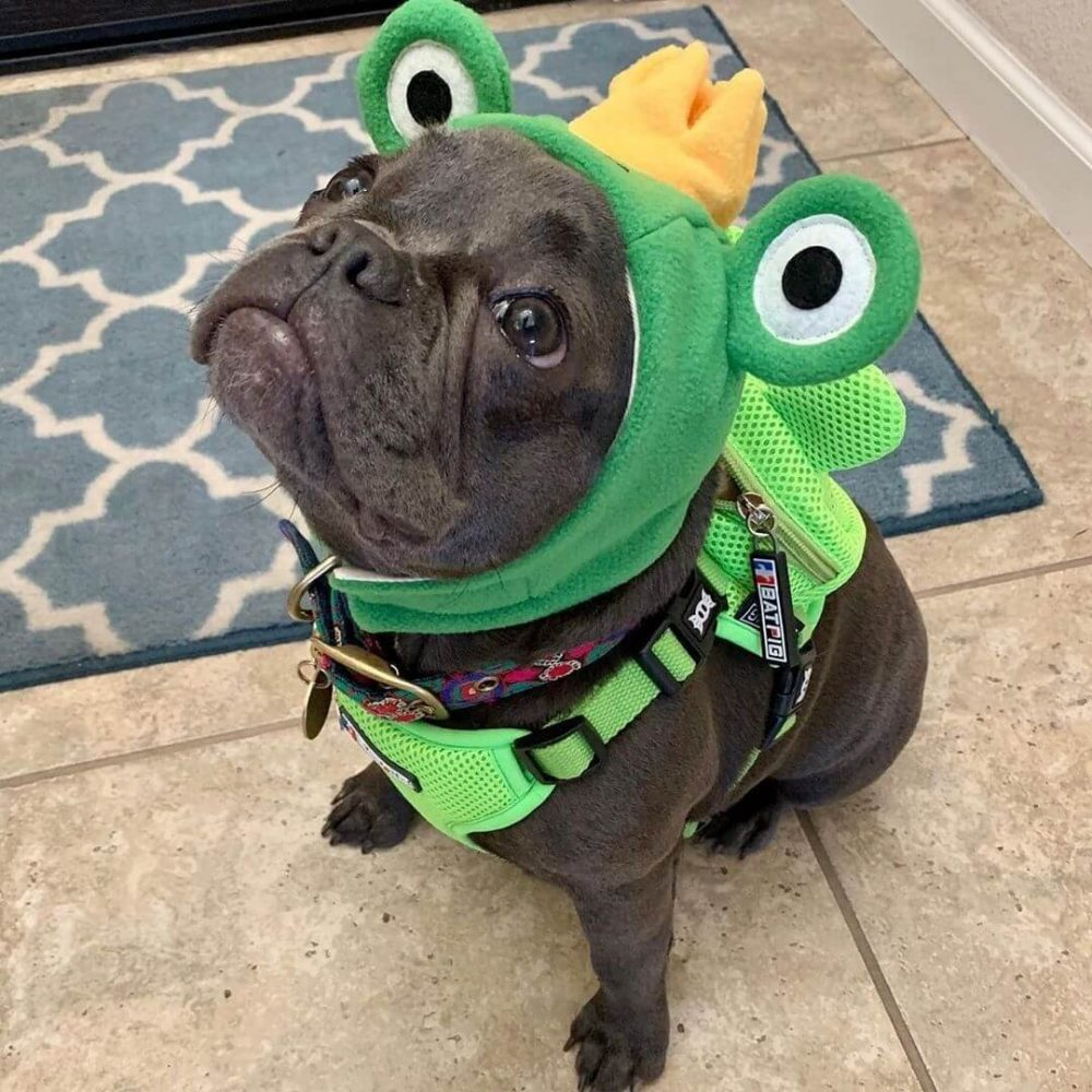 BATPIG Backpack Harness Frog Customer Photo 11