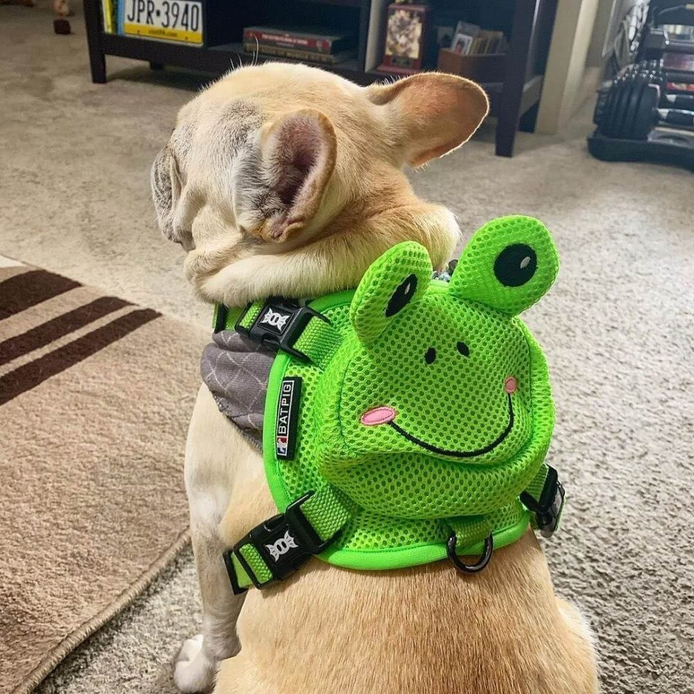 BATPIG Backpack Harness Frog Customer Photo 15