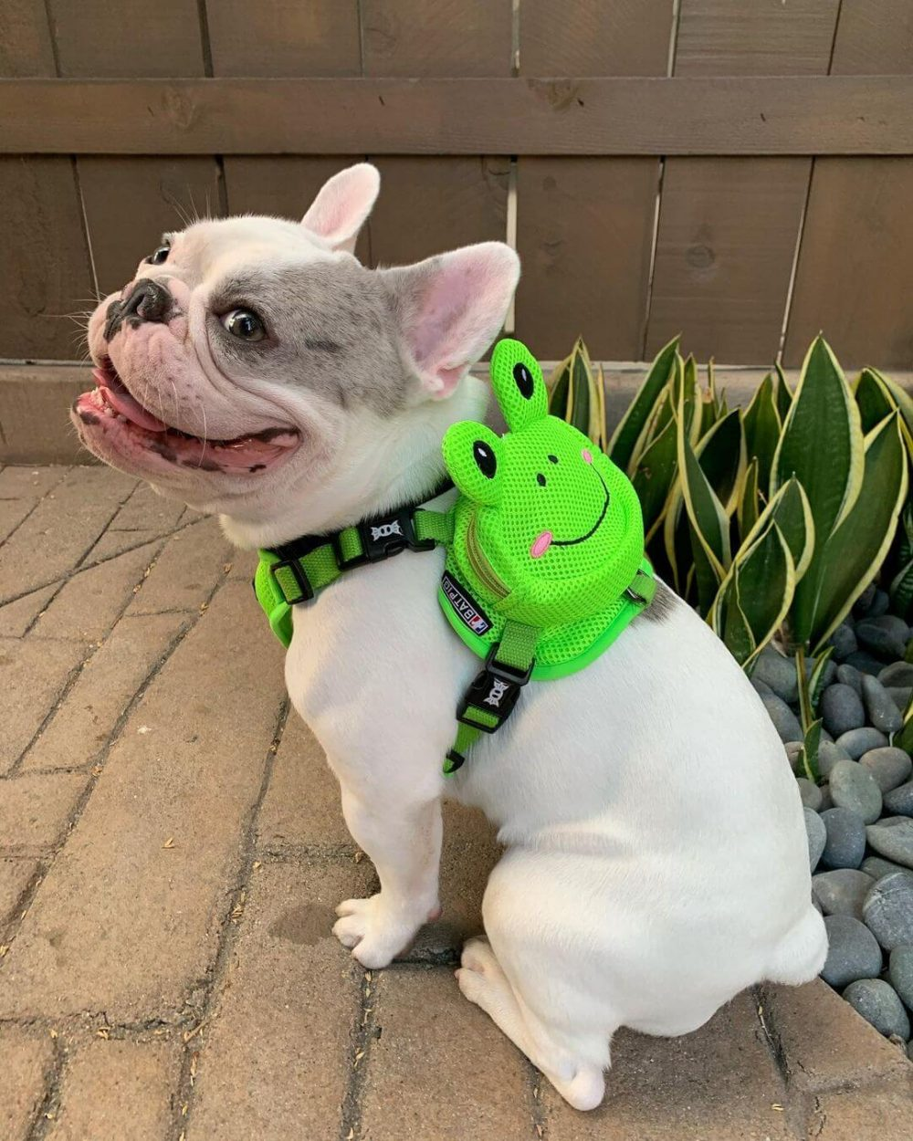 BATPIG Backpack Harness Frog Customer Photo 21