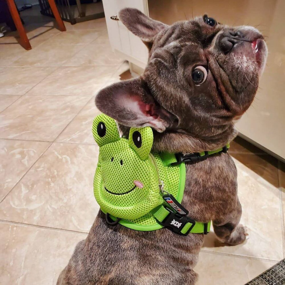 BATPIG Backpack Harness Frog Customer Photo 25
