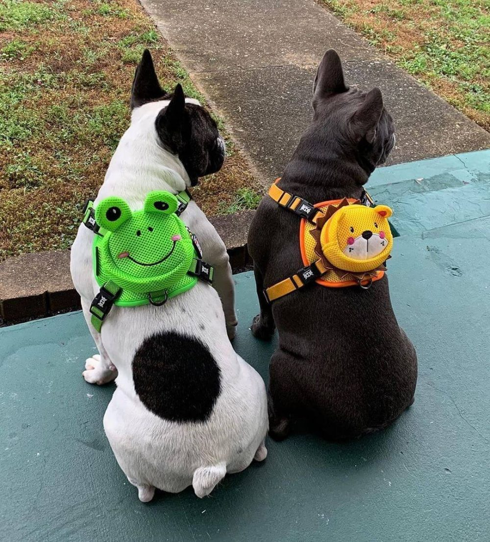 BATPIG Backpack Harness Frog Customer Photo 26