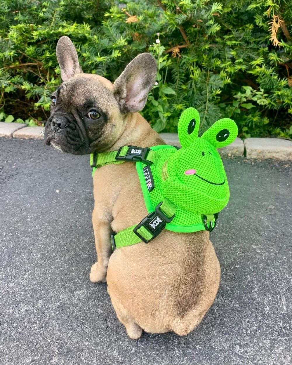 BATPIG Backpack Harness Frog Customer Photo 4