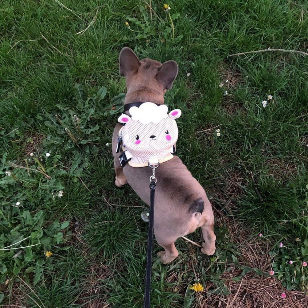 BATPIG Backpack Harness Lamb Customer Photo 3