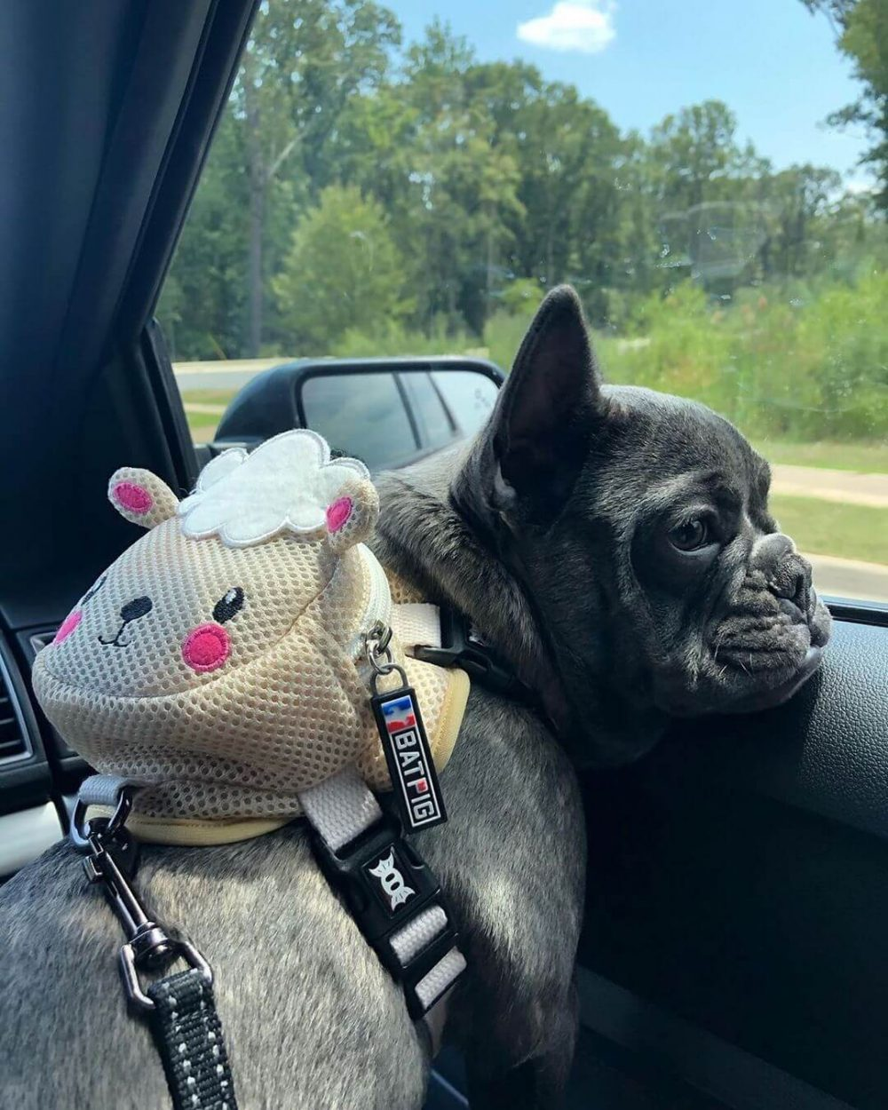 BATPIG Backpack Harness Lamb Customer Photo 7