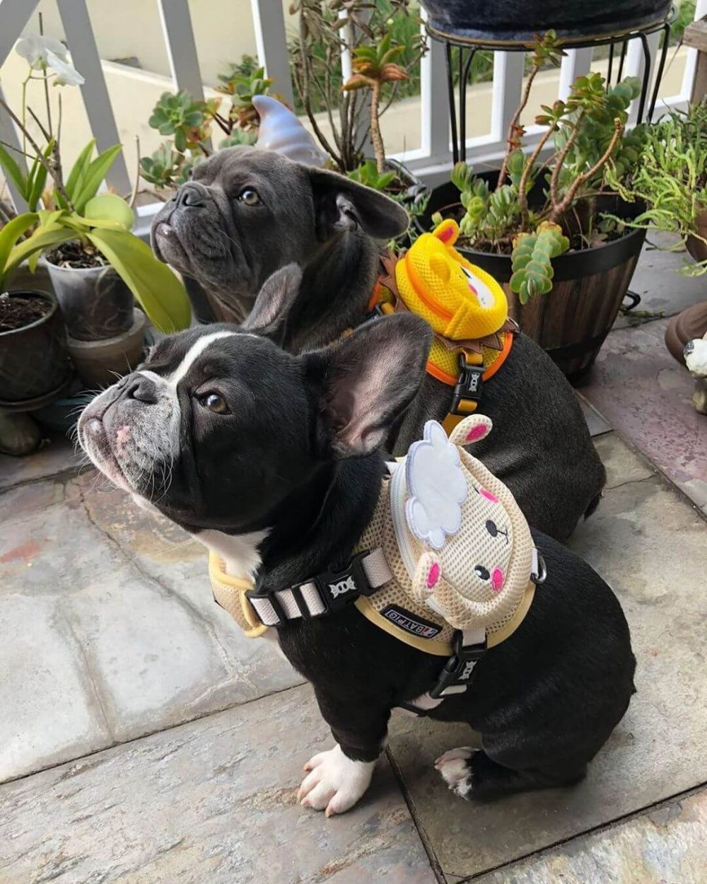 BATPIG Backpack Harness Lamb Customer Photo 9