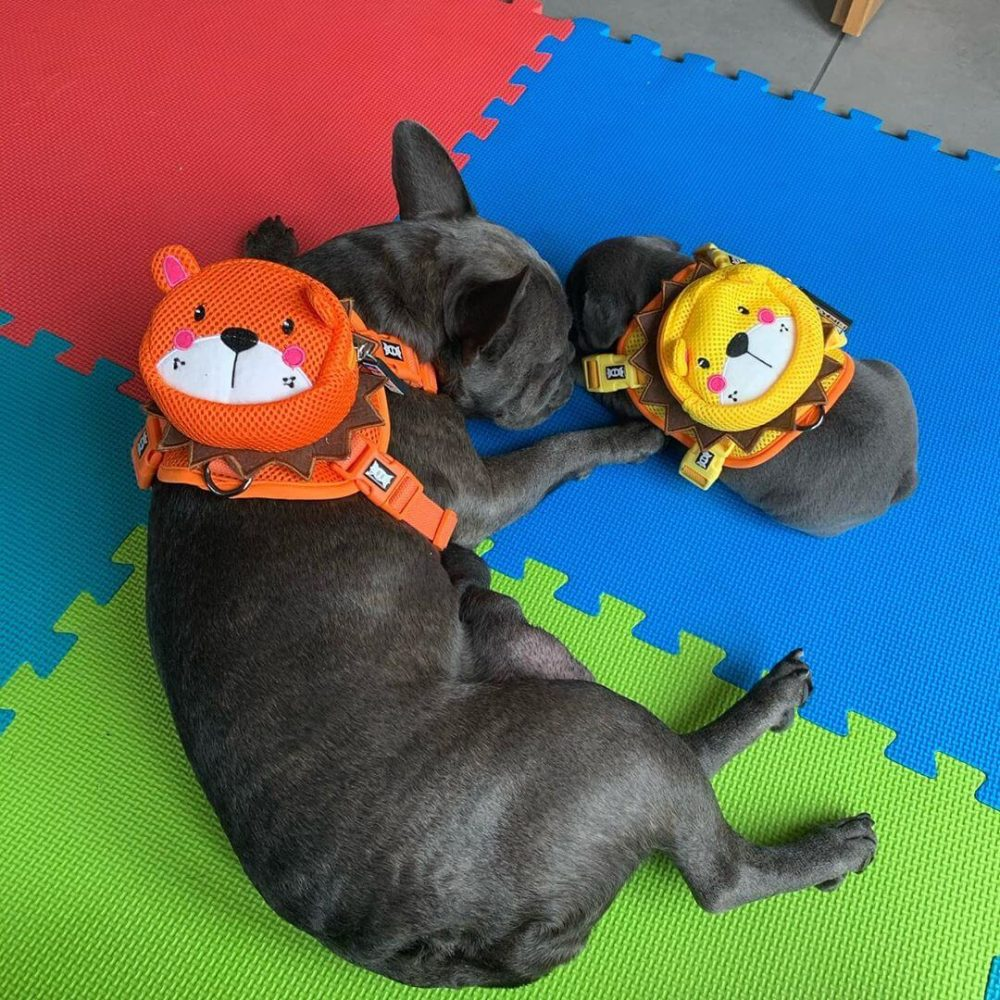 BATPIG Backpack Harness Orange Lion Customer Photo 1