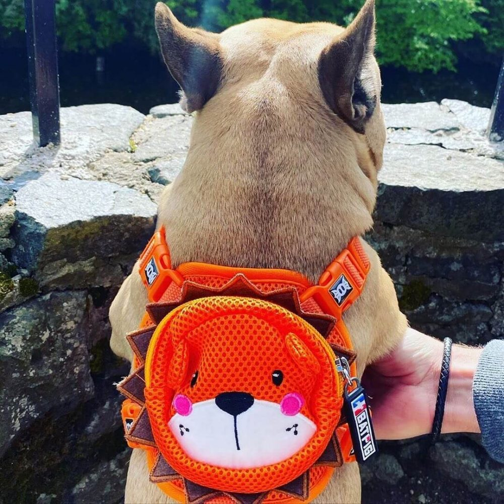 BATPIG Backpack Harness Orange Lion Customer Photo 2