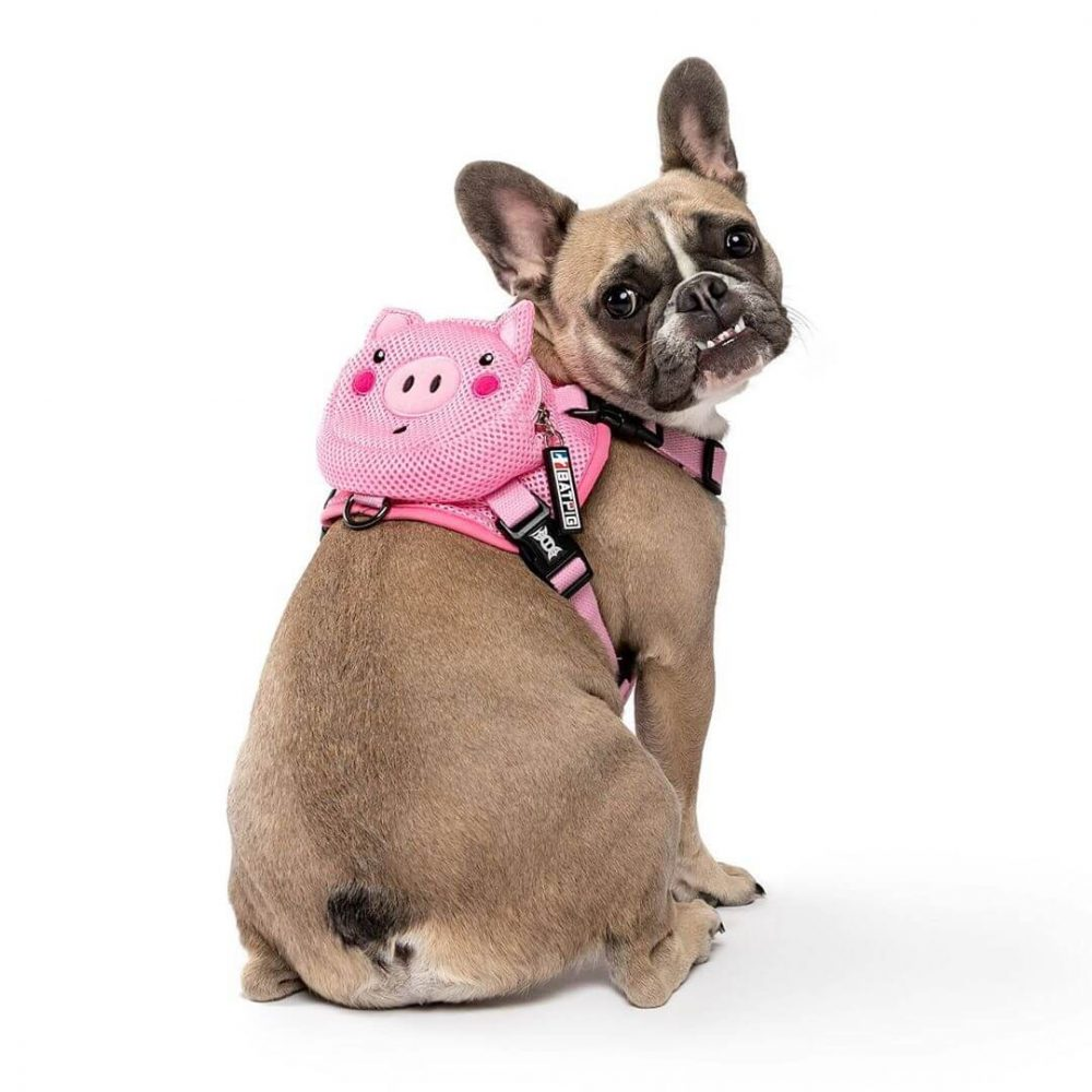 BATPIG Backpack Harness Piggy Customer Photo 1