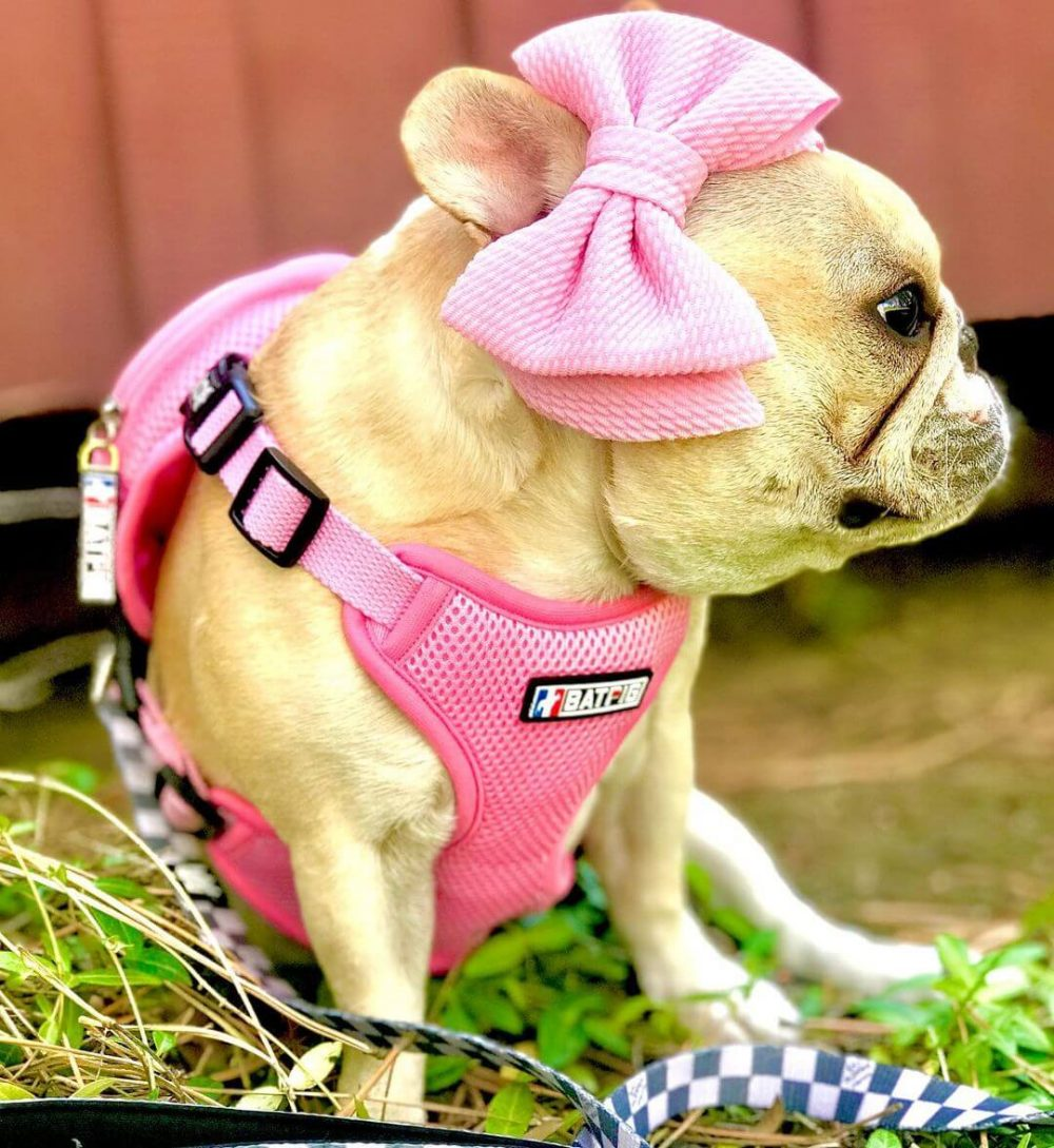 BATPIG Backpack Harness Piggy Customer Photo 10