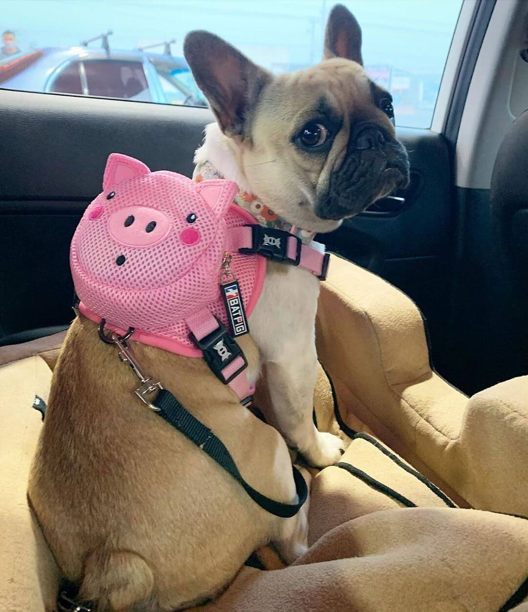 BATPIG Backpack Harness Piggy Customer Photo 11