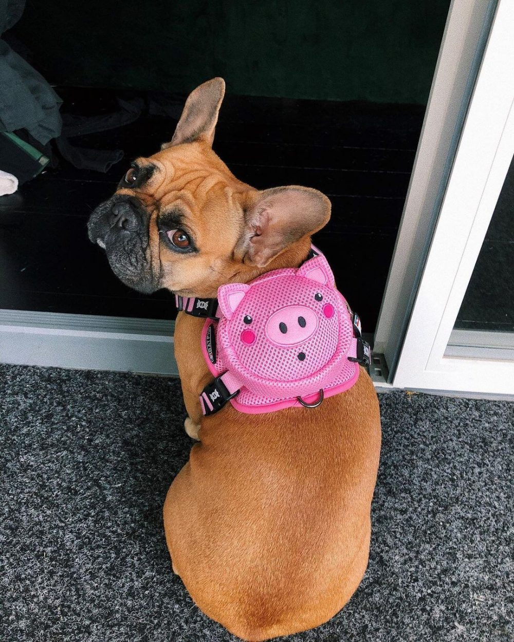 BATPIG Backpack Harness Piggy Customer Photo 14