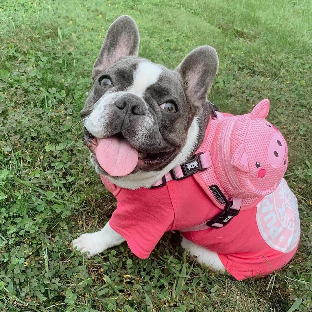 BATPIG Backpack Harness Piggy Customer Photo 2