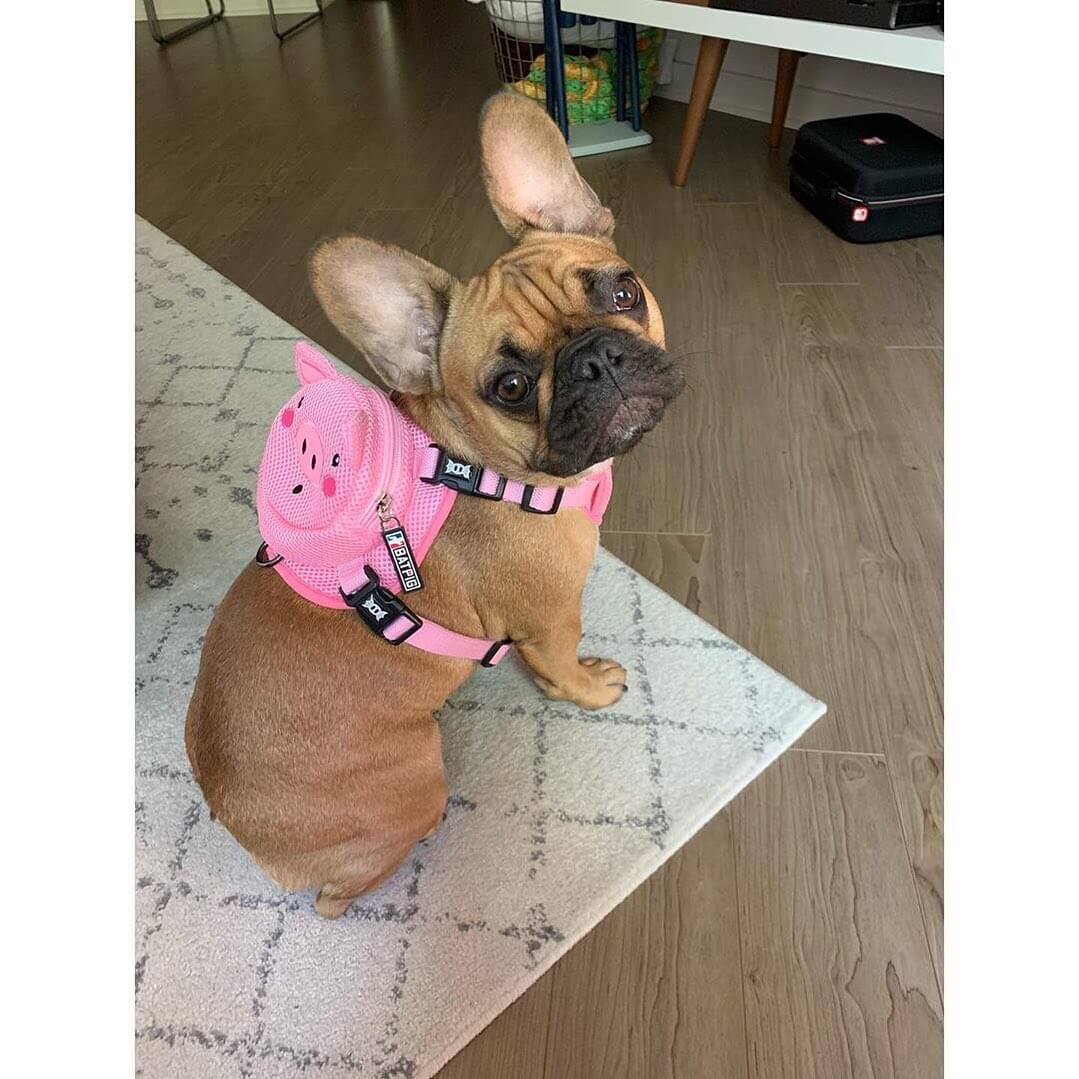 BATPIG Backpack Harness Piggy Customer Photo 8