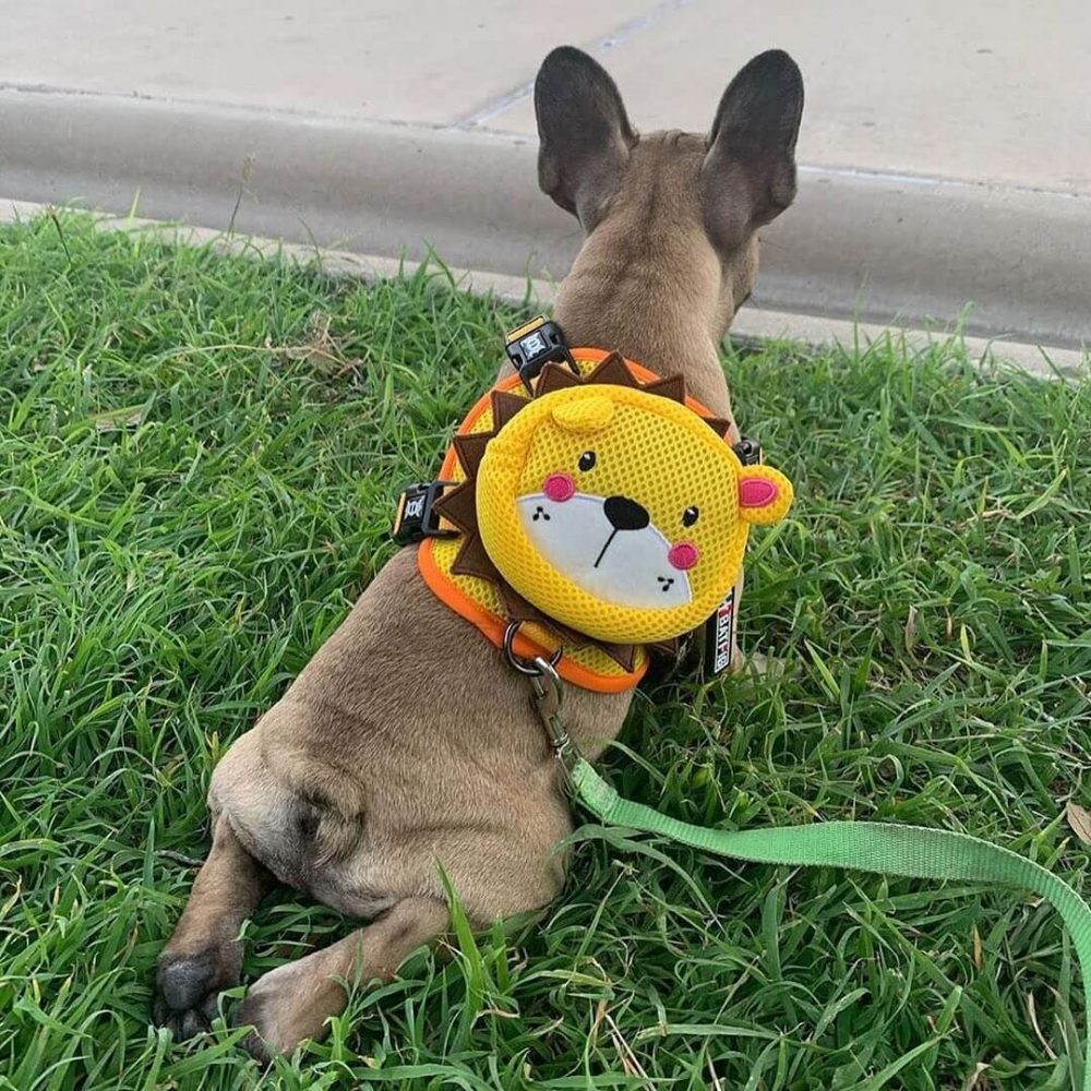 BATPIG Backpack Harness Yellow Lion Customer Photo 4