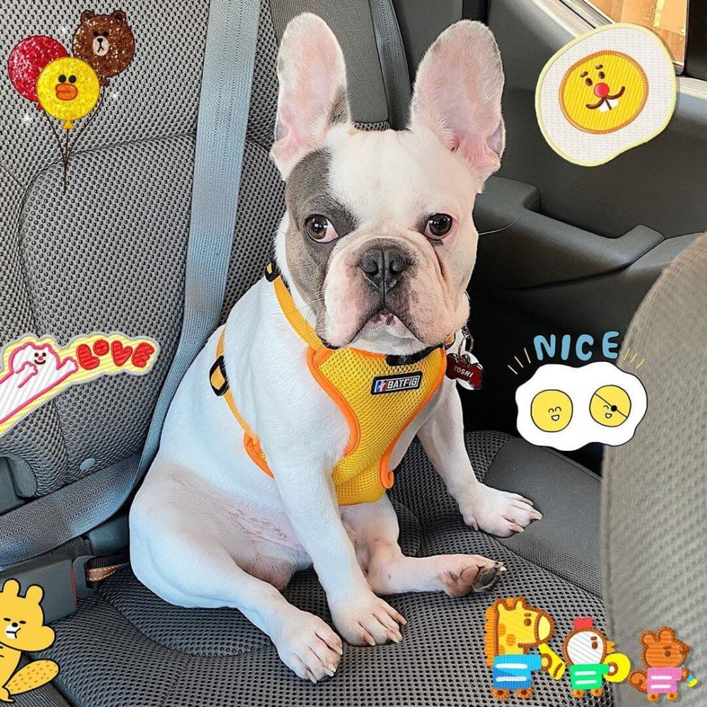 BATPIG Backpack Harness Yellow Lion Customer Photo 7